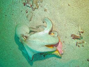 Photo: Octopus