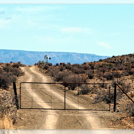 Karoo farm gate scene by Carla Marais - Transportation Roads ( farm, karoo, road, windmill, gate )