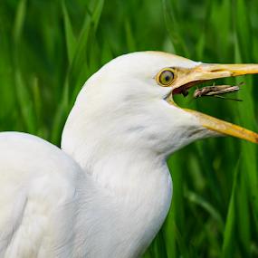 by Awais Mustafa - Animals Birds