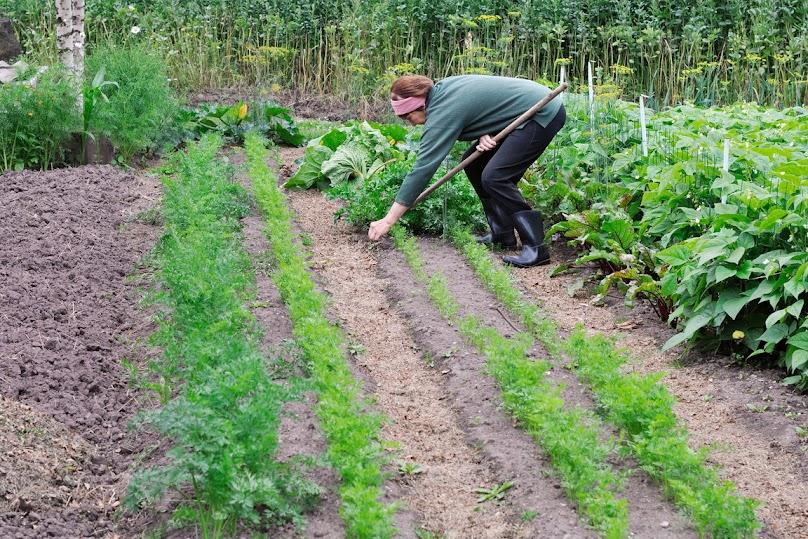 Pielęgnacja ogrodu warzywnego
