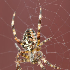 by Nigel Hook - Animals Insects & Spiders (  )