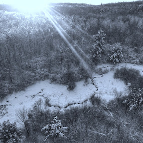 Frozen Forest by Olivier Grau - Landscapes Forests ( winter, drone, tree, creek, snow, forest,  )