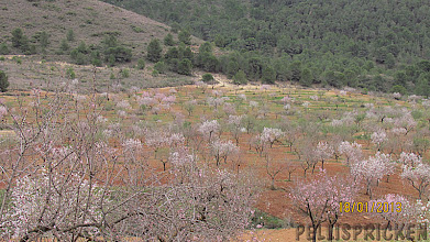 Photo: Den som bodde i detta hus hade stora områden med Mandelträd som snart står i full blom