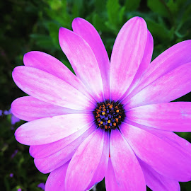 Flower by Manish Kaushal - Instagram & Mobile Android ( travel photography, purple flower, mobilography, winter flower, flower )