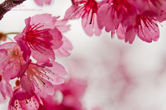 Photo: Simply Pink