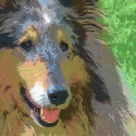 Dog by Mārīte Ramša - Digital Art Animals