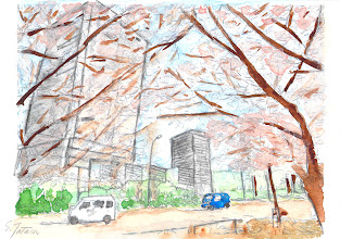 Photo: 10-桜のきれいな季節の晴海通り