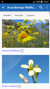 Anza-Borrego Wildflowers- screenshot thumbnail