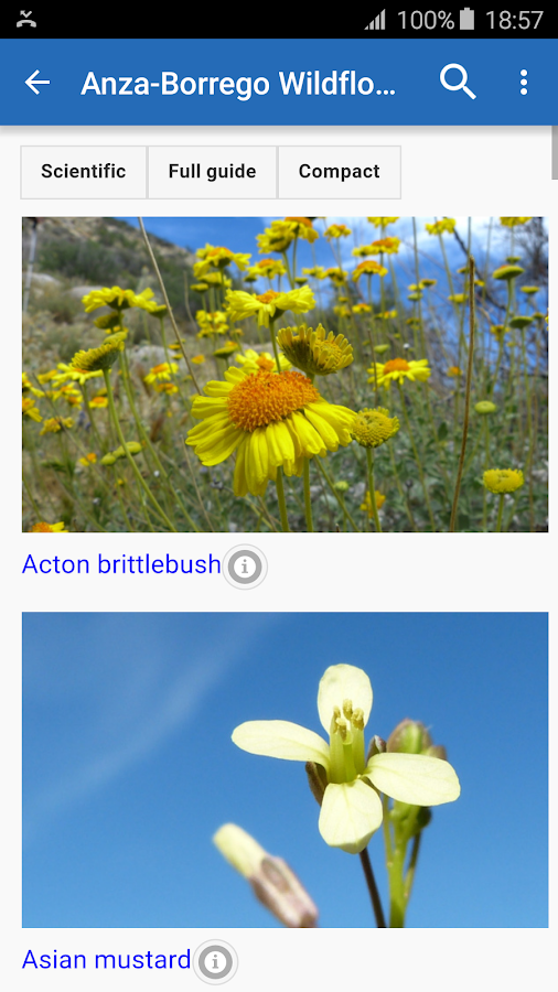 Anza-Borrego Wildflowers- screenshot