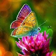 Примета бабочка залетела в квартиру
