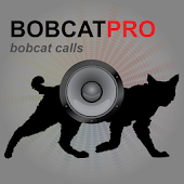 Bobcat Calls - Bobcat Sounds
