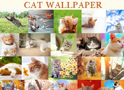 Wallpaper Cat Collection - náhled