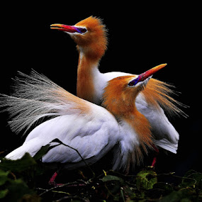 a new couple by ZW Young - Animals Birds