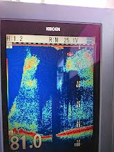 Photo: 「水深81m! 反応、底から水面まで!」
