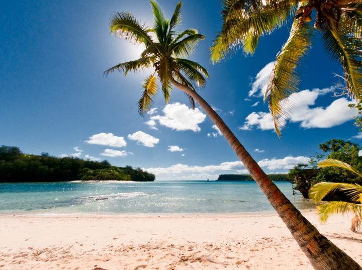 A Polinesian Coconut Tree di Andrea Izzotti