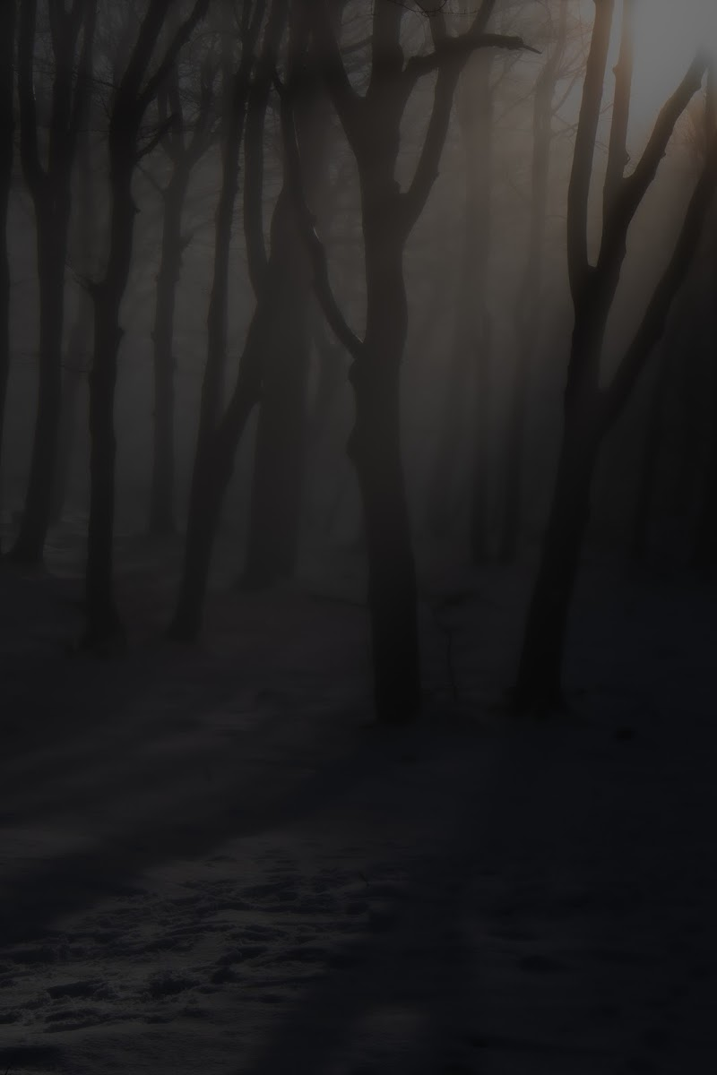 oltre il bosco...... di loredana de sole