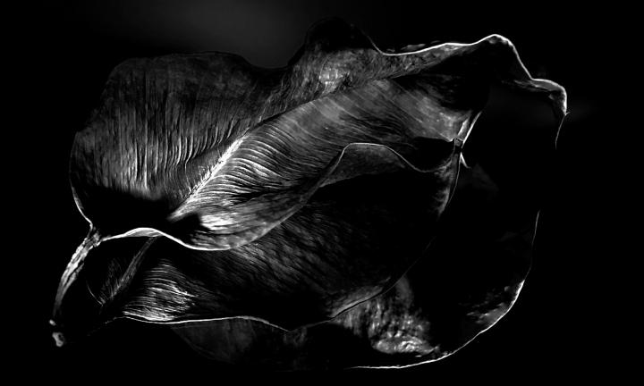 Specchiandosi... di Paolo Zanoni