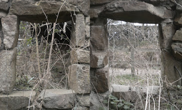 Photo: This one is from the ruins of an old hobbit house that you can find in the Botanic Gardens in Edinburgh, about where the rock garden is.