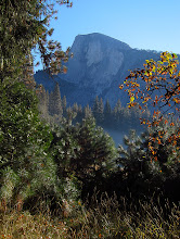 Photo: Vertical one of Half Dome behind shrubbery. .#2782