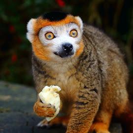 by Gérard CHATENET - Animals Other Mammals