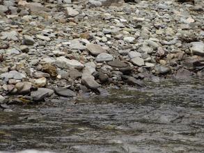 Photo: Cross the river