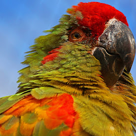 by Wilson Beckett - Animals Birds