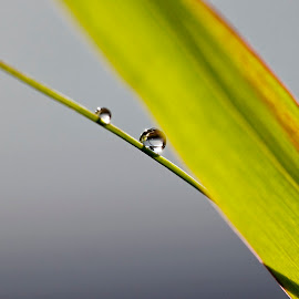 by Pavel Vlček - Nature Up Close Natural Waterdrops