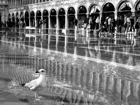 A Venezia di BananaJoe