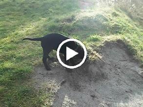 Video: Sam si také našel zábavu