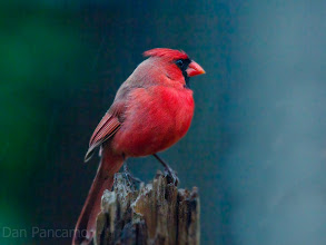 Photo: Santa Cardinal