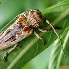 Gray-body longhorn beetle, 灰身叉尾天牛