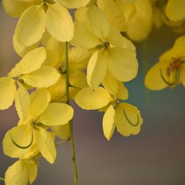 Yellow flower closeup by Basant Malviya - Flowers Tree Blossoms ( blooming, yellow, flower,  )