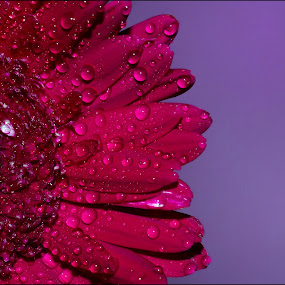 Smile of a flower by Manoj Kumar Kd - Nature Up Close Flowers - 2011-2013 ( smile, flower, water drop )