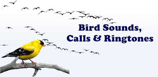 kingfisher ringtone 2018