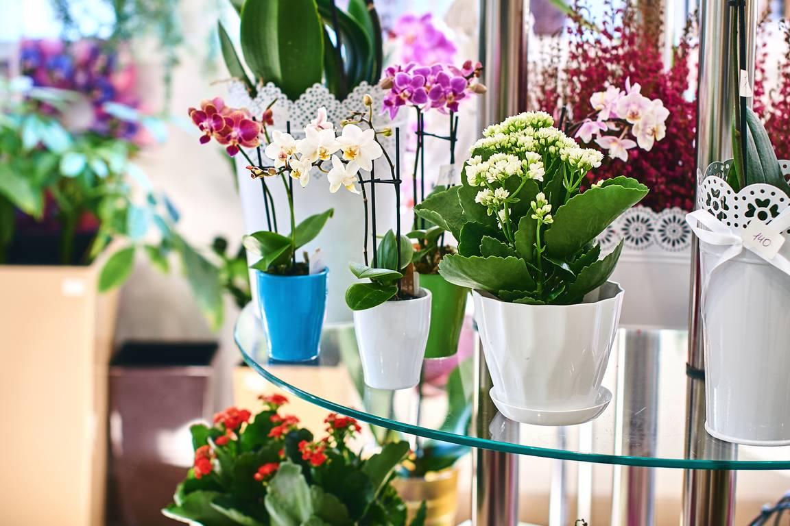 Kwiaty Doniczkowe Pielegnacja Bez Chemii 10 Domowych Sposobow Twojogrodek Pl