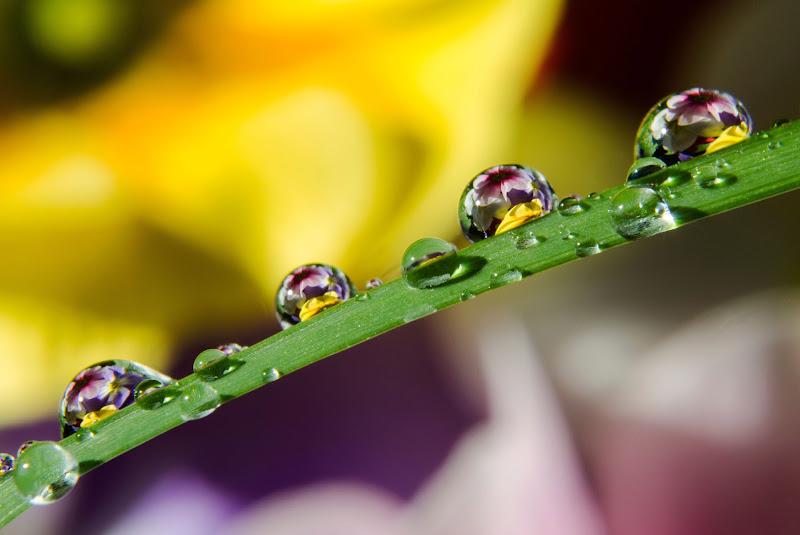Spring drops... di Licia Piazza