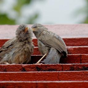 gossip  by Pradipta Bagchi - Animals Birds
