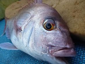 Photo: 綺麗な真鯛です!