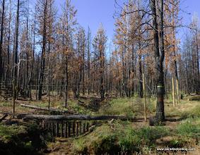 Photo: Riparian exclosure, Melvin Creek. Rooster Rock Burn.