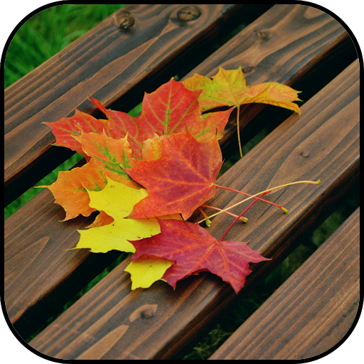 Autumn Wallpapers Apps On Google Play