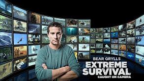 Bear Grylls: Extreme Survival Caught on Camera thumbnail