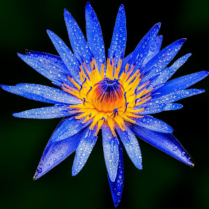 flower1 (1 of 1)-2.JPG