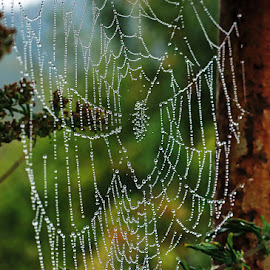 by Boris Buric - Nature Up Close Webs (  )