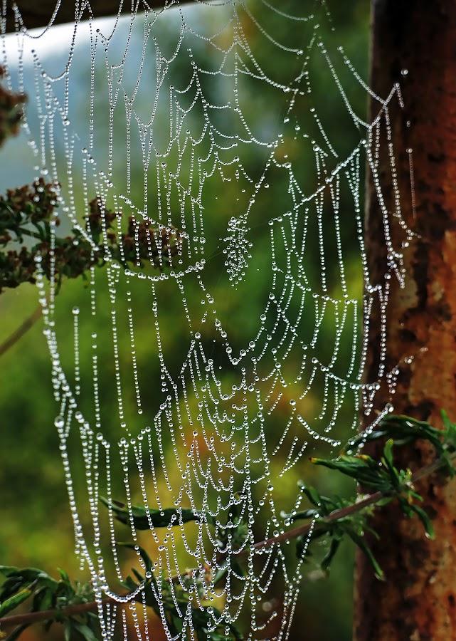 by Boris Buric - Nature Up Close Webs (  )