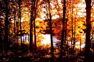 Photo: Fall colors. 1007