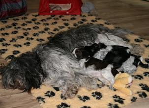 Photo: aber beim Kuscheln mit Mama passen alle noch schön nebeneinander