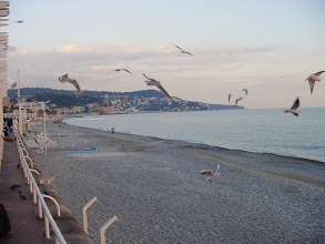 Photo: The pieces of day-old baguette being tossed by a woman just off-camera to the left are guaranteed to draw seagulls.