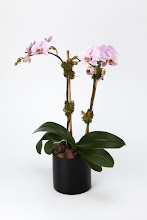 Photo: Light Pink Orchid Plant