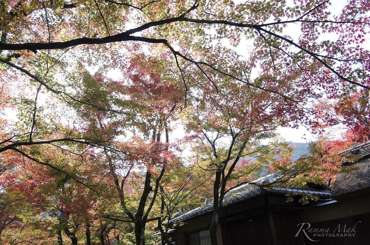 日本京都寶嚴院紅葉