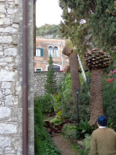 Photo: Cutting down diseased Palm trees at st George's